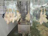 Linha de abate de frangos