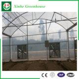 Invernadero plástico de una sola capa comercial con el marco de acero