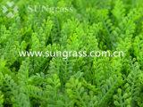 Parede Artificial Decrative grama para decoração (SUNW-MZ00019)