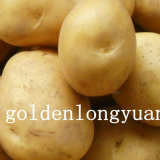 Golden Supplier of New Crop Fresh Potato From China