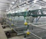Автоматическое оборудование клетки цыпленка для курочки и малого цыпленка (типа рамка)