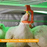 Alimentateurs et abreuvoirs de poulet au poulet pour Nigeria Poulets