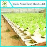 Heißer Verkaufs-Wasserkultursystem für Gemüse