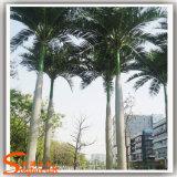 يرتّب شجرة كبيرة [ككنوت تر] اصطناعيّة لأنّ زخرفة