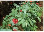 Agente selettivo della calca solubile in acqua composta del fertilizzante dell'amminoacido >100g/L di elevata purezza