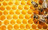 Polvo roto membrana celular del polen de la abeja