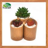 Естественный Bamboo суккулентный плантатор бамбука бака