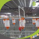 Système alimentant automatique de chaîne efficace de volaille dans la ferme de porc moderne