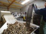 Sault Sacos de cultivo de ostras de água, gaiolas