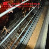 Jaula automática del pollo de la batería de la granja avícola del diseño de Henan Jinfeng para el pollo del huevo