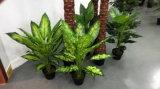 Искусственние заводы и цветки Diffenbachia 80cm Gu-Img_20160128_114923