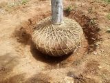 Boa qualidade com 3yrxwsl 1.6 Tree Spade