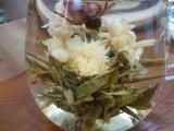 Чай чая Китая китайский зацветая