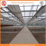 Tipo serra di vetro di Venlo per gli ortaggi/fiori