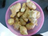 Heiße verkaufenfrucht-Gemüse Dincing Maschine, Kartoffel/Tomate/Mangofrucht Dicer würfelndes Gerät mit Cer genehmigte