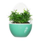 자연적인 방향을%s 가진 지능적인 실내 정원 또는 작은 공기 정화기