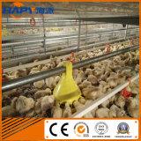 Sistema Breeding da gaiola automática para a galinha da camada