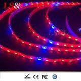 lâmpada da tira da corda da corda de Growlight da planta do diodo emissor de luz de 5050SMD Red+Blue