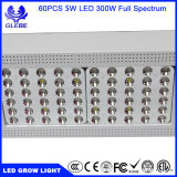 Hydroponic 감응작용 5W 칩 고성능 LED는 상업적인 작물을%s 300W가 가벼운 LED를 증가하는 증가하는 빛을 증가한다