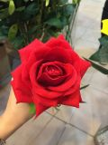 Professional Fabricant Cheap Red Rose Fleur artificielle de la Chine