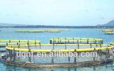 Aquiculture de truite cultivant des cages de poissons