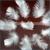 4-6cm、2-4cm.の100%洗浄された白く小さいガチョウまたはアヒルの羽