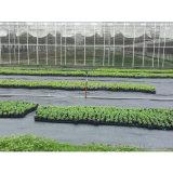 Tela tejida de plástico para el control de malas hierbas