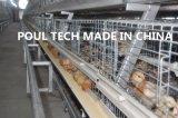 тип цыпленок дня рамки старый & малая система клетки цыпленка для сарая цыпленка
