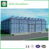 Transmitância elevada Venlo retráctil estufa de vidro para a agricultura