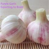 Bianco bianco del nuovo aglio fresco cinese di stagione & puro normale