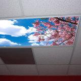 De Duurzame Volledige Film van uitstekende kwaliteit van het Plafond van de Rek van de Kleur voor Decoratie
