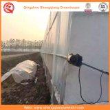 Agriculture / Commercial / Jardin serre en plastique avec système de refroidissement