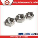 Flange Nut/Cape Nut /Nylon Nut/T Nut/Wing Nut/Public garden Nut with High Quality