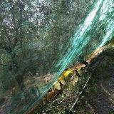 Jungfrau PET Ernte-olivgrünes Netz mit UVzusätzen (YHZ-HON03)