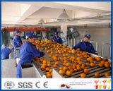 Fruto de la máquina de clasificación La clasificación de la máquina de recogida de frutas de naranja