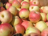 Hot Sale Commerce de gros Nouveau Red Apple Gala fraîches en provenance de Chine