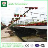 Verdure/giardino/fiori/serra film di materia plastica dell'azienda agricola