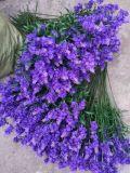 Fleurs artificielles de violette 33cm Gu-Jy1118182404