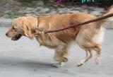 Tejido de cuero Correa de Perro Collar de perro