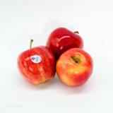 Gala royale fraîche Apple
