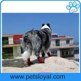 صاحب مصنع [هيغقوليتي] يمهّد محبوبة مسيكة كلب أحذية