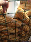 オランダの編む塀