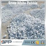 Ampliamente utilizado de piedra blanco como la nieve del guijarro/del río de la venta caliente en el suelo, pared, piscina