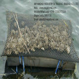 Sacchetti e gabbie Anti-Acid della maglia dell'ostrica del PE 9X9mm