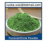 Poudre de thé vert matcha organique