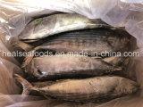 Mar de alimentação de peixes congelados toda rodada Sarda sarda 2-3kg