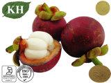 Extracto de mangostán natural 100% con alfa Mangostin