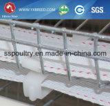 Equipamentos de aves de capoeira Galvanização a quente H Type Layer Cage