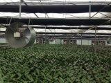 Ventilatore di scarico di pollicultura del bestiame della serra