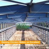 Чертеж конструкции дома птицефермы для слоев в ферме Кении